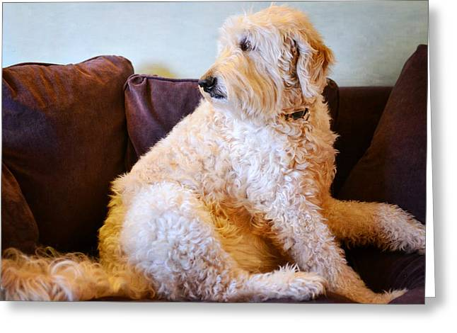 Goldendoodle Greeting Cards - Occupied Greeting Card by Fraida Gutovich