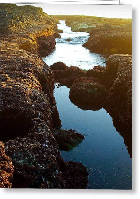 Rill Greeting Cards - Ocean Beach Rill California Greeting Card by Sharon French