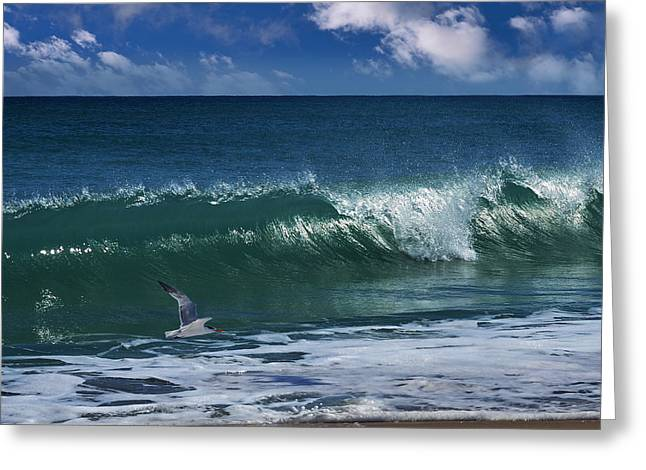 Flying Seagull Greeting Cards - Ocean Blue Morning Greeting Card by Laura  Fasulo