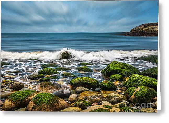 Spring In Maine Greeting Cards - Ocean Breeze Greeting Card by Susan Cole Kelly Impressions