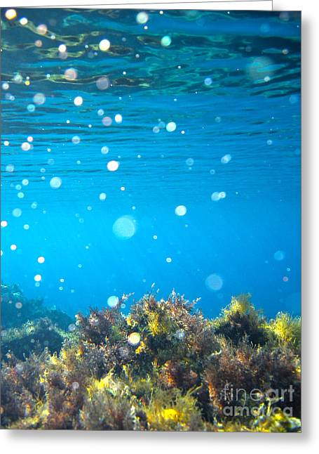 Garden Scene Photographs Greeting Cards - Ocean Garden Greeting Card by Stylianos Kleanthous