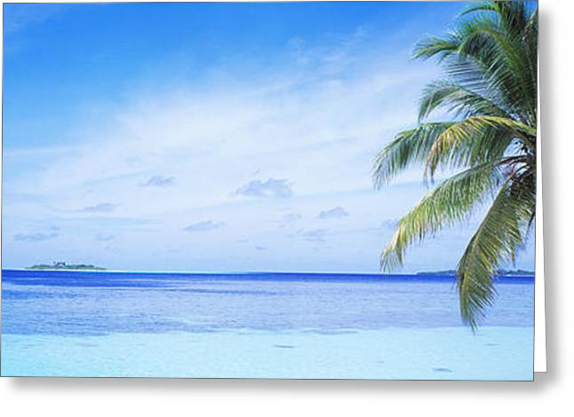 Tropical Island Greeting Cards - Ocean, Island, Water, Palm Trees Greeting Card by Panoramic Images
