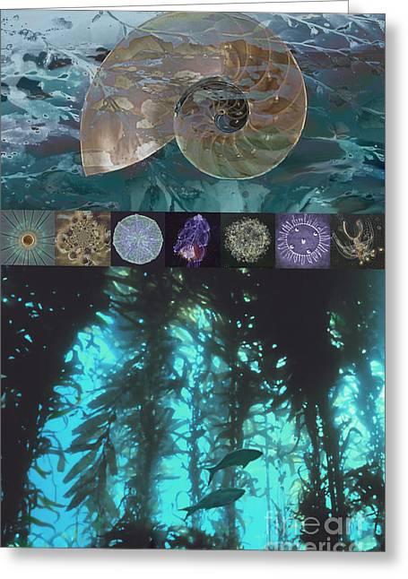 Snorkel Greeting Cards - Ocean Kelp  Greeting Card by Ursula Freer