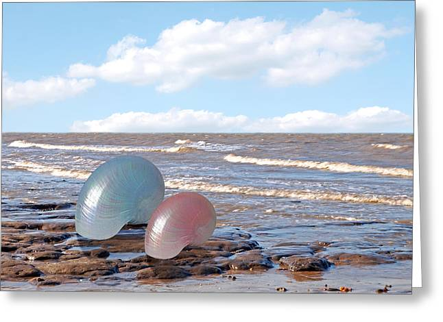 Aquatic Greeting Cards - Ocean Love Affair - Nautilus Shells Greeting Card by Gill Billington