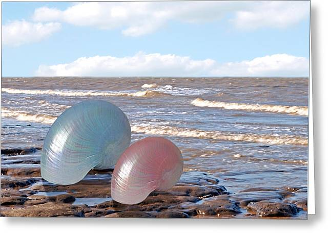 Gills Rock Greeting Cards - Ocean Love Affair - Nautilus Shells - Square Greeting Card by Gill Billington