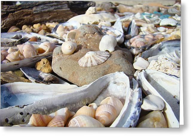 Seashell Art Photographs Greeting Cards - Ocean Sea Shells art prints Seashells Greeting Card by Baslee Troutman