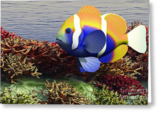 Clown Fish Greeting Cards - Ocean Shallows Greeting Card by Corey Ford