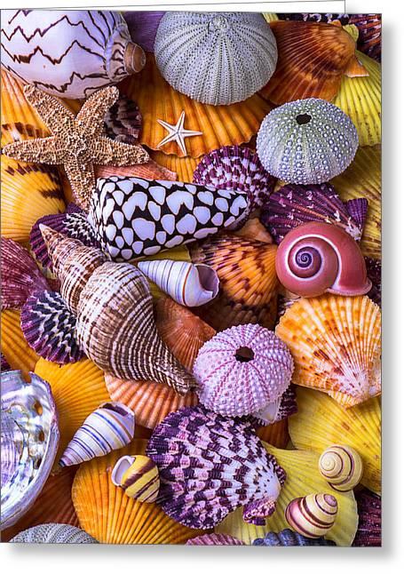 Orange Starfish Greeting Cards - Ocean treasures Greeting Card by Garry Gay