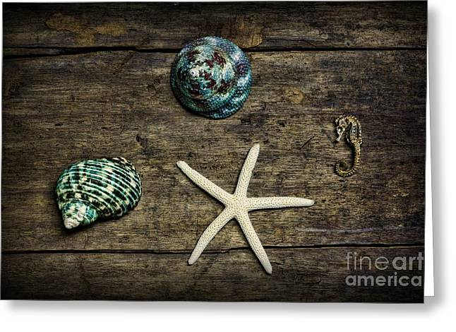 Shell Texture Greeting Cards - Ocean Treasures Greeting Card by Paul Ward
