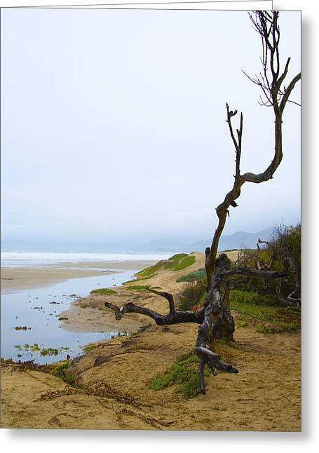 Oceano Greeting Cards - Oceano Dunes After The Storm 3 Greeting Card by Barbara Snyder
