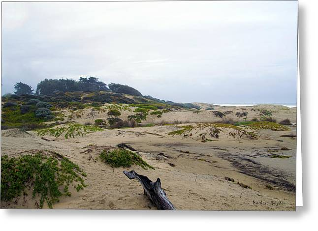 Oceano Greeting Cards - Oceano Dunes After The Storm Greeting Card by Barbara Snyder