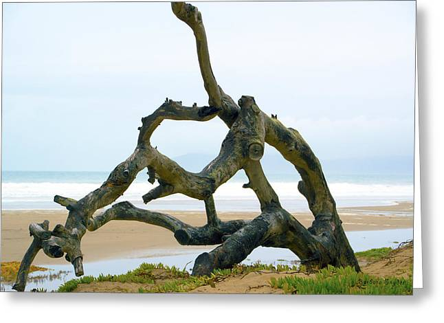 Oceano Greeting Cards - Oceano Dunes After The Storm II Greeting Card by Barbara Snyder