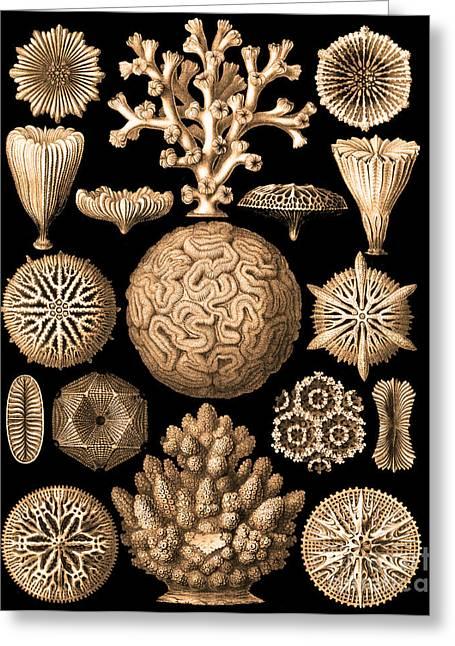 Coastal Decor Digital Art Greeting Cards - Ocean Treasures III Greeting Card by Marilu Windvand