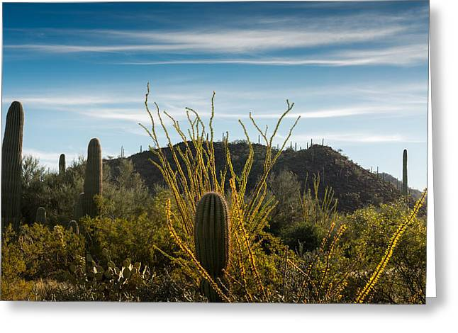 Western Southwest Greeting Cards - Ocotillo Morning Greeting Card by Joseph Smith
