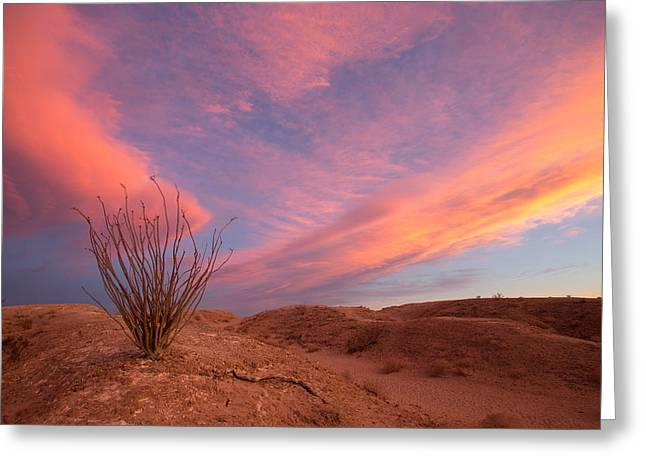 Locations Greeting Cards - Ocotillo Skies Greeting Card by Peter Tellone