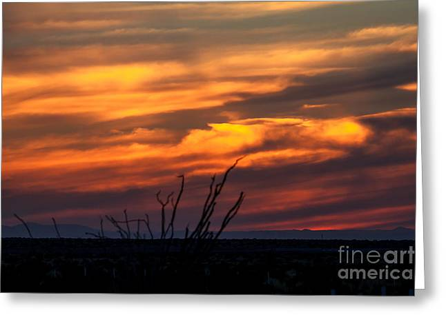 Haybale Greeting Cards - Ocotillo Sunset Greeting Card by Robert Bales