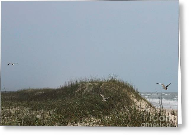 Ocracoke Dunes And Gulls Greeting Card by Cathy Lindsey