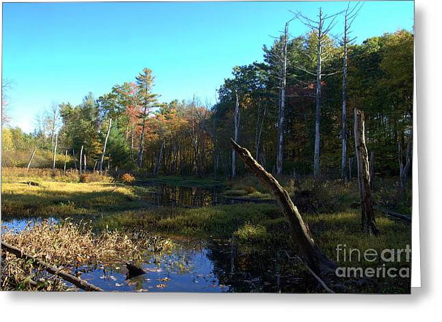 Union Connecticut Greeting Cards - October Autumn Light  Greeting Card by Neal  Eslinger