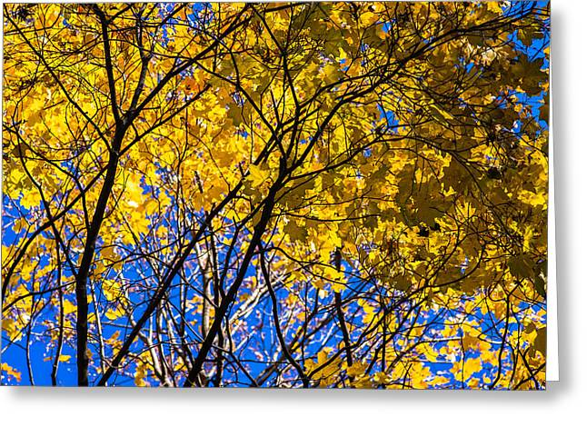 Rectangles Greeting Cards - October Blues 4 Greeting Card by Alexander Senin