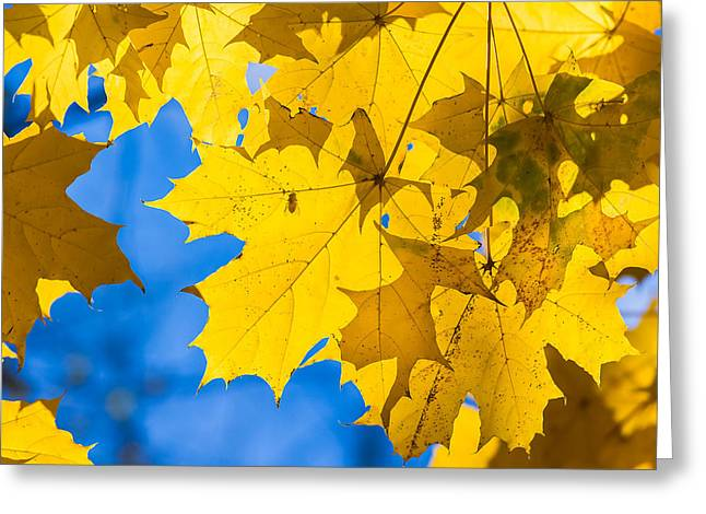 October Blues 8 - Square Greeting Card by Alexander Senin