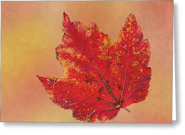 Enhanced Greeting Cards - October Glory Greeting Card by Angie Vogel
