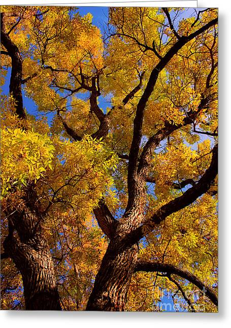 Striking Photography Greeting Cards - October Greeting Card by James BO  Insogna