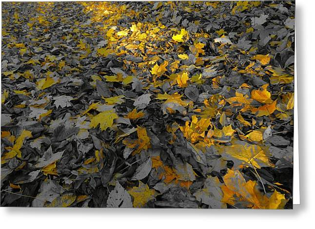 Forest Floor Greeting Cards - October Morning Greeting Card by Dan Sproul
