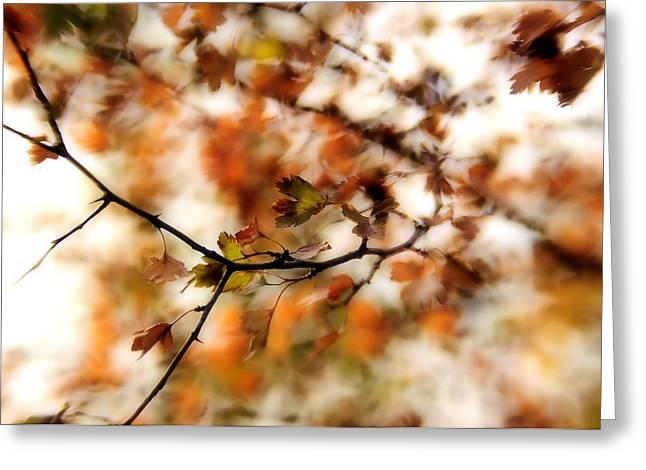 October Greeting Card by Reka Lendvai
