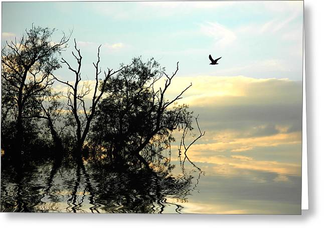 Bare Trees Greeting Cards - October skies Greeting Card by Sharon Lisa Clarke
