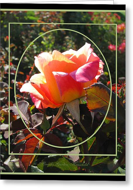 Pillow With Roses Greeting Cards - October Surprise Greeting Card by Brooks Garten Hauschild