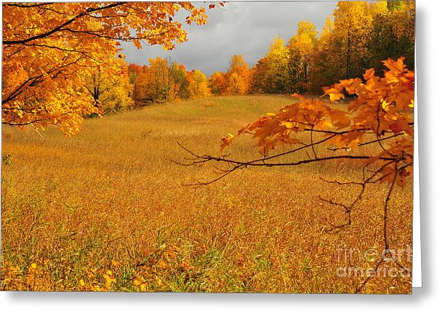 Colors Greeting Cards - October Greeting Card by Terri Gostola