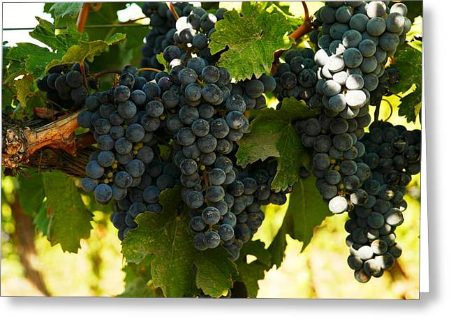 Blue Grapes Greeting Cards - October Vintage Bonair Winery  Greeting Card by Jeff  Swan
