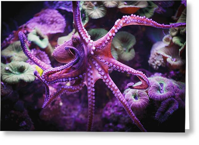 Differential Focus Greeting Cards - Octopus Israel Greeting Card by Reynold Mainse