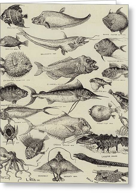 Assorted Drawings Greeting Cards - Odd Fish at the International Fisheries Exhibition Greeting Card by Louis Wain