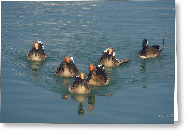 Orange Beak Greeting Cards - Odd Goose Out Greeting Card by Mary Machare
