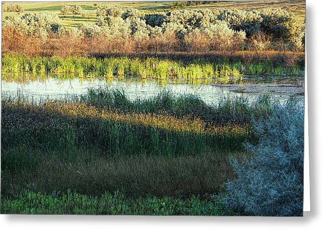 Pond In Park Greeting Cards - Ode to Summers Eve Greeting Card by Kathy Bassett
