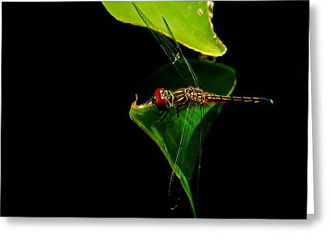 Family Of Doctors Greeting Cards - Odonata Threat of Rain Greeting Card by Susan Duda