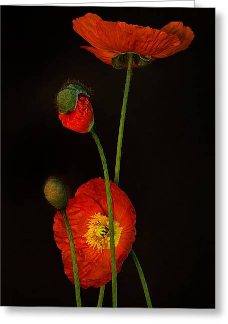 Poppies Art Gift Greeting Cards - Odyssey Greeting Card by Toni Chanelle Paisley