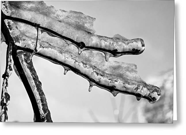 Star Burst Prints Greeting Cards - Of Ice and Twigs 5 monochrome Greeting Card by Steve Harrington