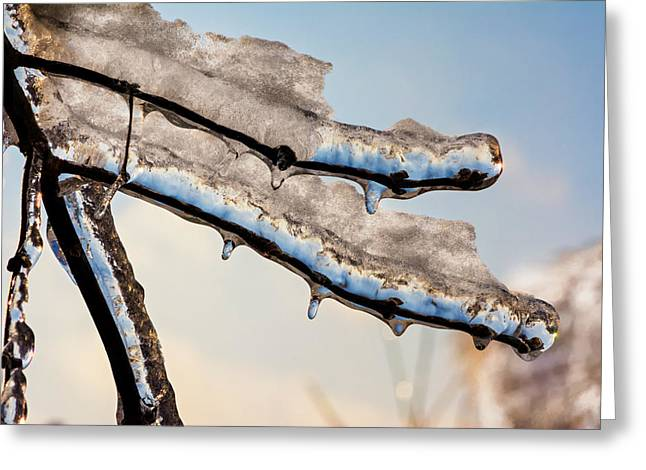 Star Burst Prints Greeting Cards - Of Ice and Twigs 5 Greeting Card by Steve Harrington