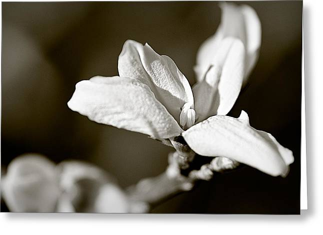 Blooms Greeting Cards - Of Love and Hope Greeting Card by Jamie Starling