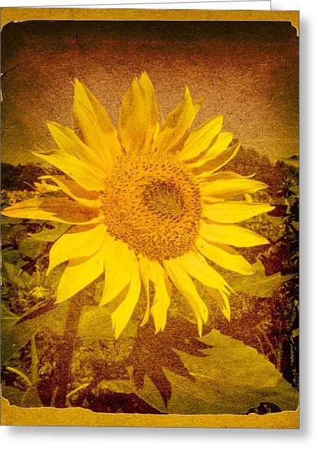 Flowers Photographs Greeting Cards - Of Sunflowers Past Greeting Card by Bob Orsillo