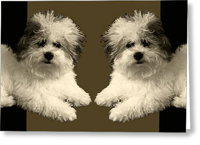 Dogs Digital Art Greeting Cards - Sepia Dogs Sepia Pillow Greeting Card by Doris Rowe