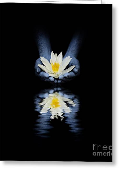 Offering Of The Lotus Greeting Card by Tim Gainey