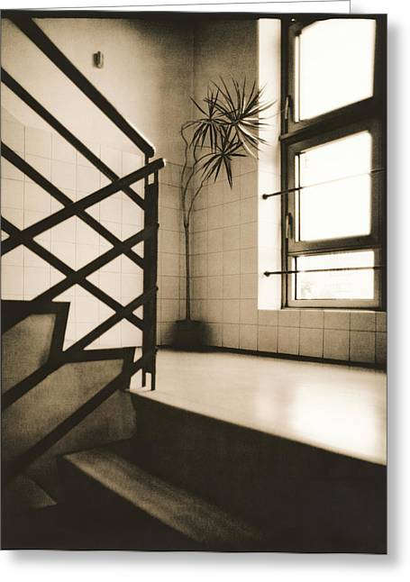 Flight Of Stairs Greeting Cards - Office plant Greeting Card by Alexander Kurganov
