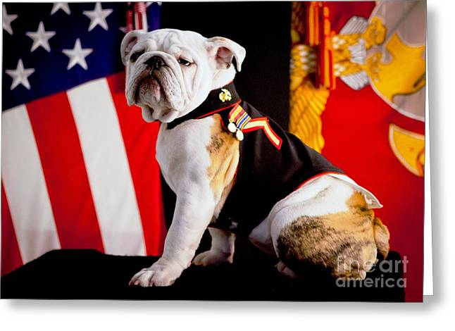 U.s. Marine Corps Greeting Cards - Official Mascot of the Marine Corps Greeting Card by Pg Reproductions