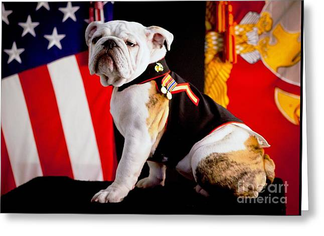 Official Mascot Of The Marine Corps Greeting Card by Pg Reproductions