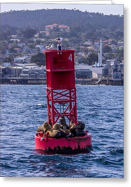 Sea Lions In Monterey Bay Greeting Cards - Oh Buoy Monterey California Greeting Card by Randy Straka
