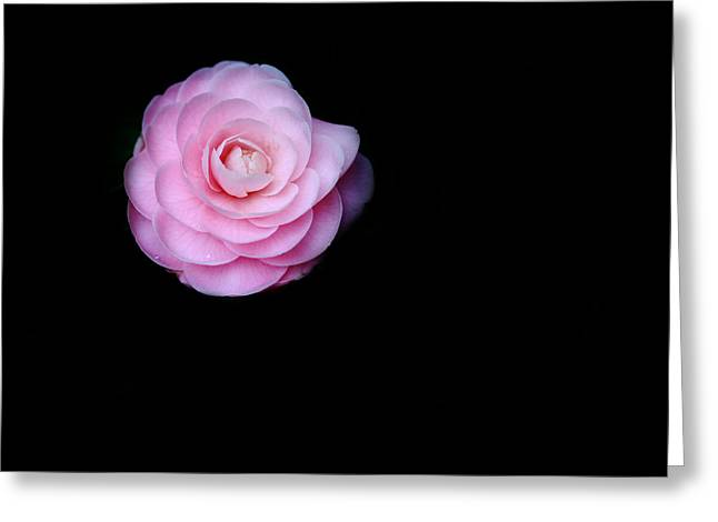 Oh Camellia Greeting Card by Rebecca Cozart