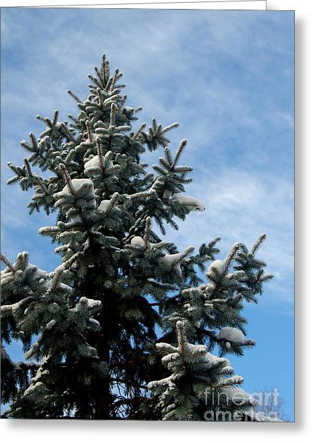 Evergreen With Snow Greeting Cards - Oh Christmas Tree Greeting Card by Kitrina Arbuckle